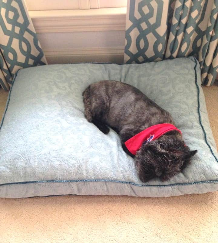 bgi custom dog bed