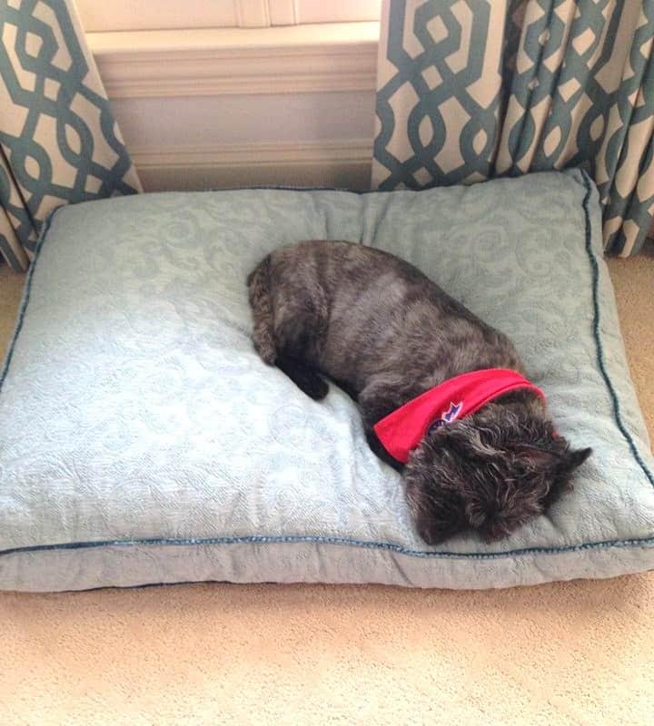 bgi custom dog bed