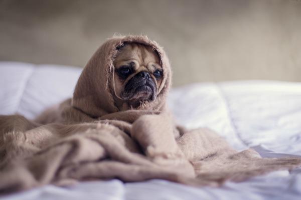 How to Have a Pet-friendly Home Remodel | Interior Design Dallas | Barbara Gilbert Interiors